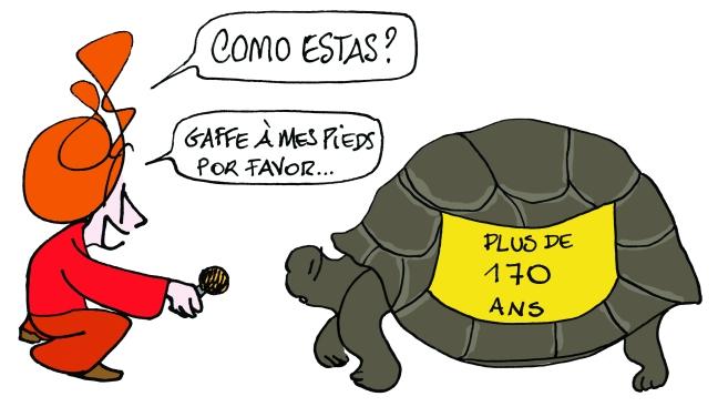 vignette tortue immortalite mep 2.jpg